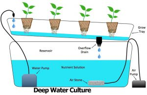 Deepwater Culture