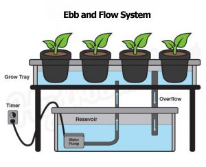 Show ebb and flow system