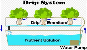 shows hydroponic drip system