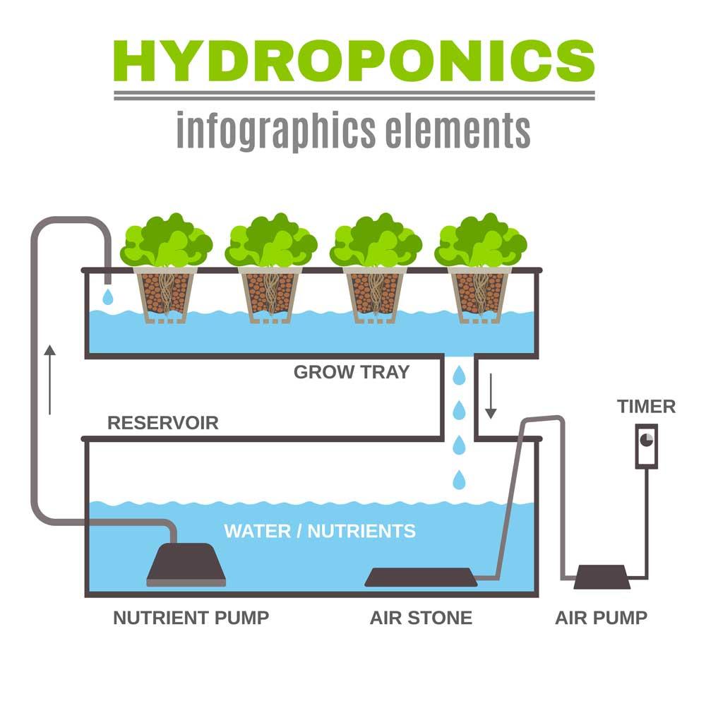 hydroponics infograph