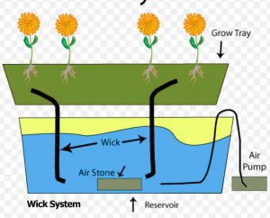 shows hydroponic wick system