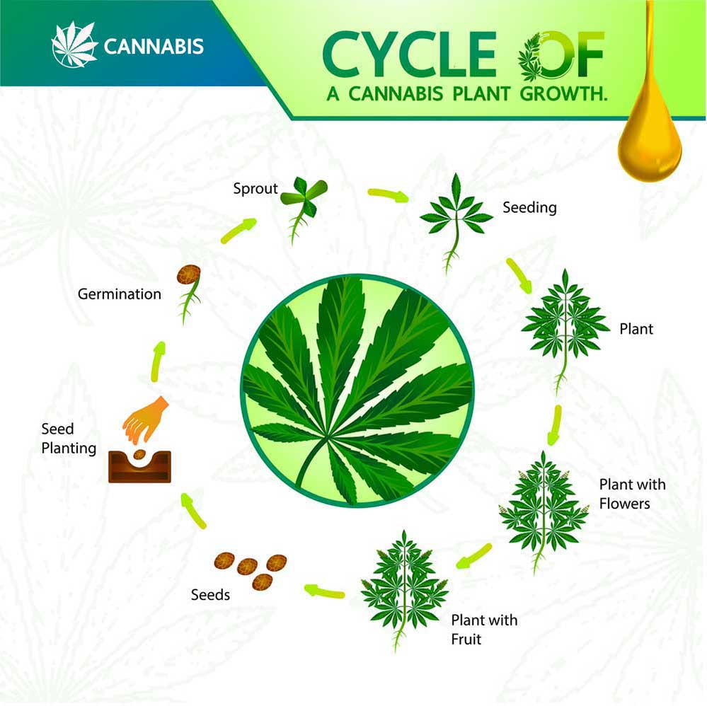 infogram on weed growth