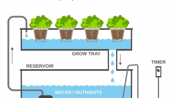 Hydroponic Systems 101 How they Work and Types