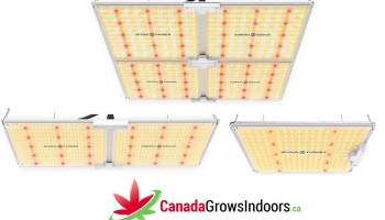 Spider Farmer SF Led Grow Light Review