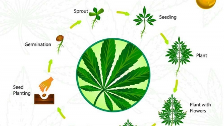 How to Grow Weed – Beginners Guide